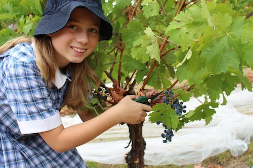 Mount Lilydale Mercy College's Wine Gold Medal