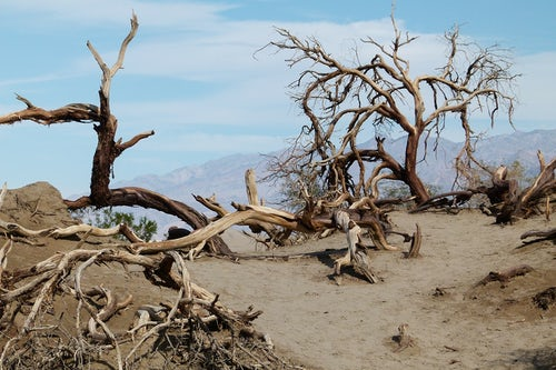 World Day Against Desertification and Drought, 17 June