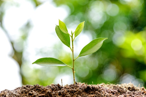 UISG Webinar: 'Engaging the Vision of Laudato Si'