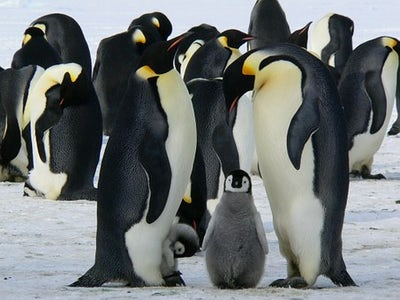 Help Create an Antarctic Ocean Sanctuary