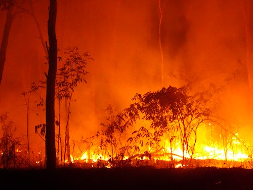 MIA Prayer Intention: Devastating Bushfires in Australia