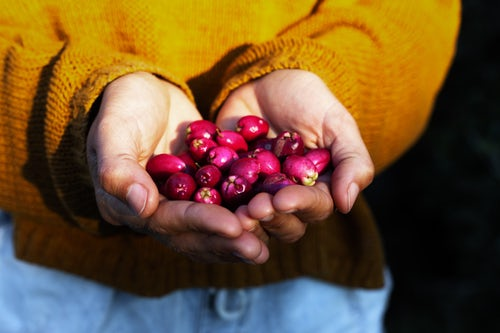 Bush Tucker to Language: How We're Engaging the Next Generation