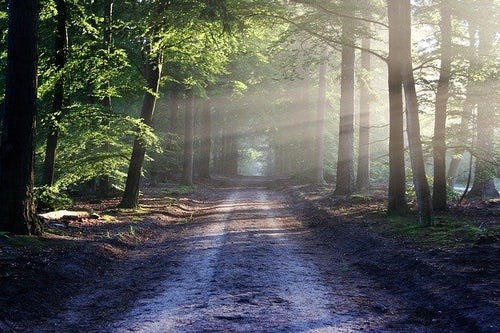 Webinar: Facilitating the Newly Emerging Religious Life: Our Role at the Graced Crossroads