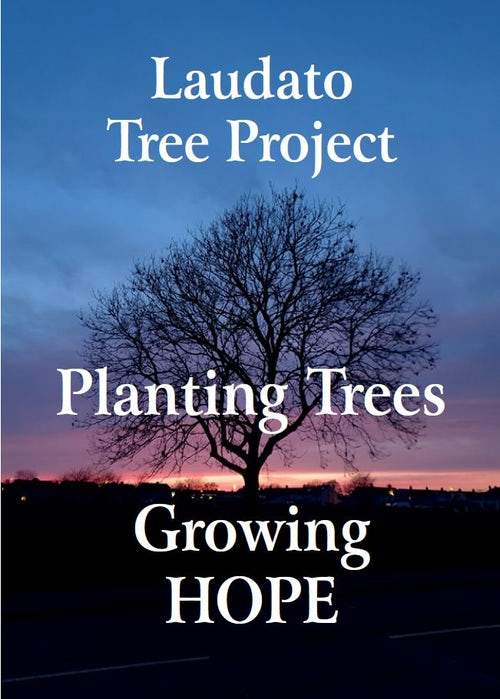 Mercy Girl Effect and the Laudato Tree Project in Association with the Society of African Missions (SMAs)